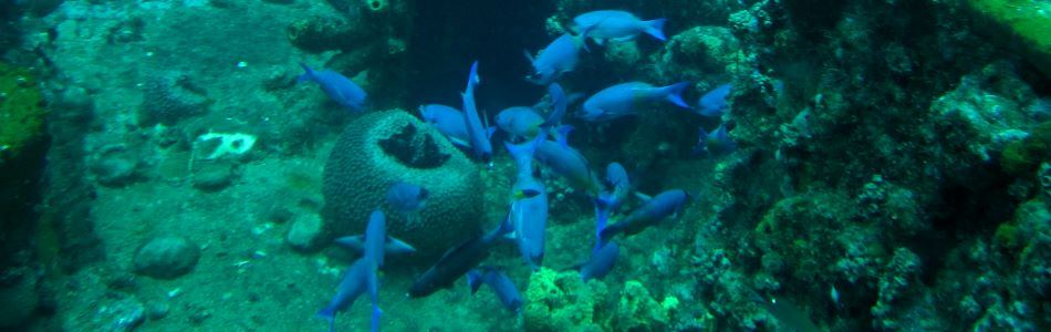 Curacao has a beautiful underwater world